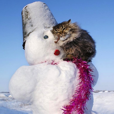cat with snowman.jpg