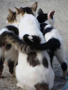 cats united