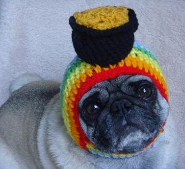 pug with pot of gold