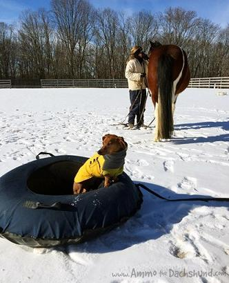 sledding-with-ponies_8846-2