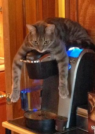 cat and coffee pot-1