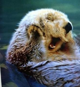 cute otter-2