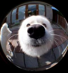 looking thru the lens