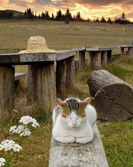 cat meditating