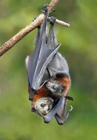 cute bats