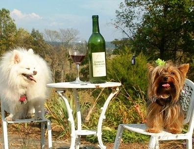 cute dogs with wine