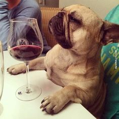 cute pug with wine