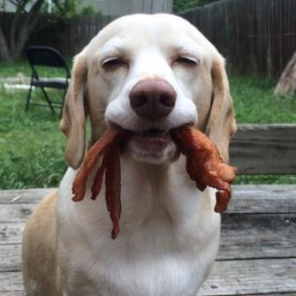 dog with bacon-1