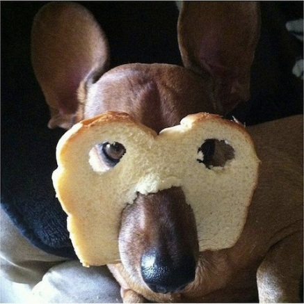 dog with bread