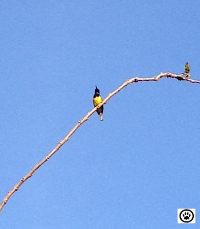 bird on branch-2