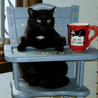 cat on high chair