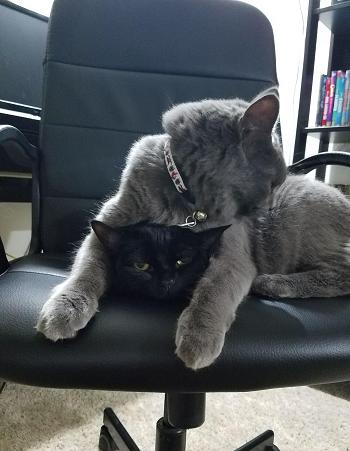cats on chair