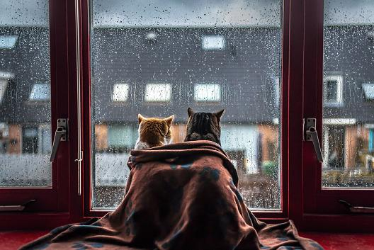 cute cats looking out window