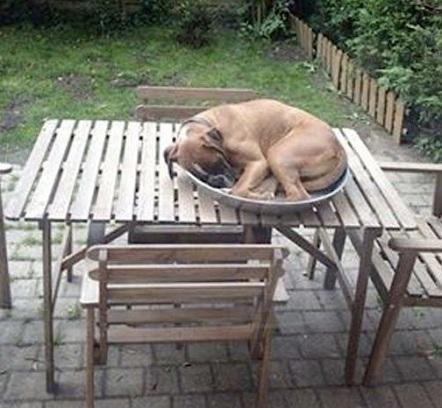 dog sleeping on table