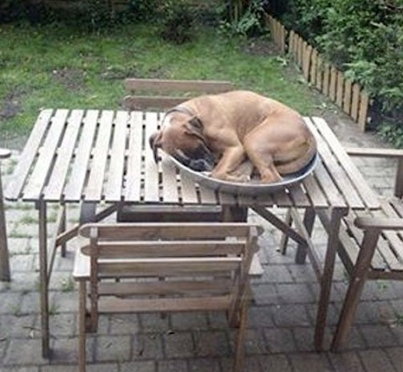 dog sleeping on table