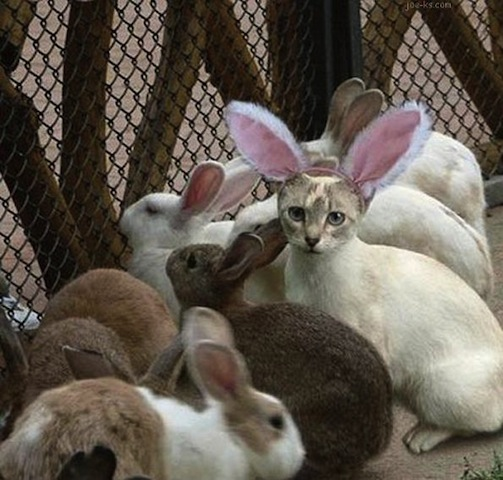 easter bunnies and cat