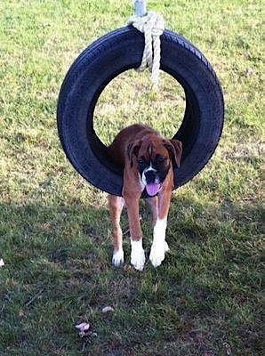 tired dog.jpg