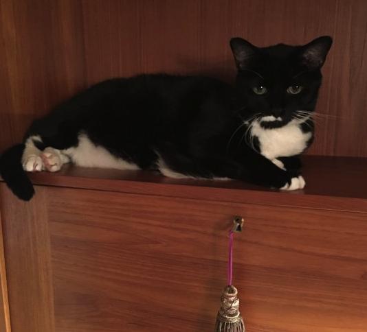 cat on empty shelf.png