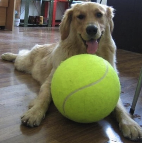 dog with giant tennis ball.png