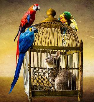 cat and parrots