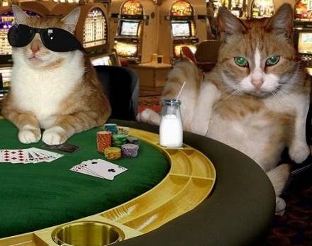 catsino cats.jpg