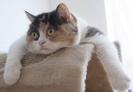 cute cat depressed