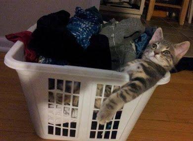 cute cat in laundry basket