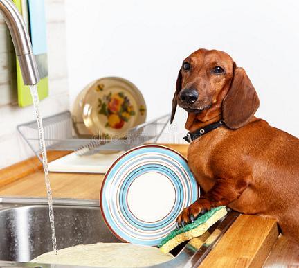 cute dog washing dishes