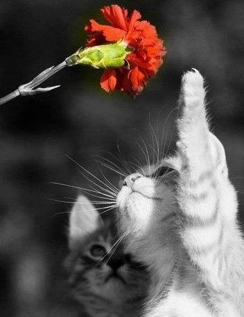 kitten touching flower
