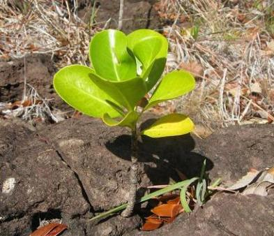 plant growing out of rock