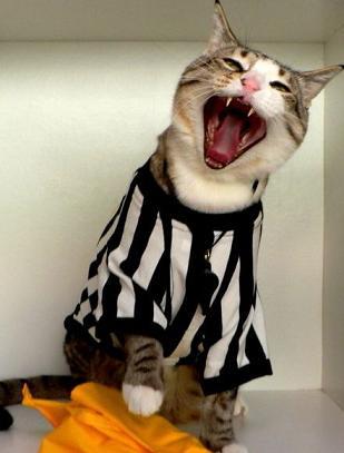 cat referee