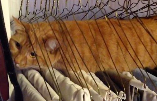 cat stuck hangers