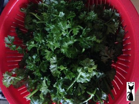 english-parsley.jpg