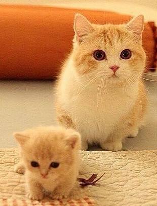 momcat and kitten