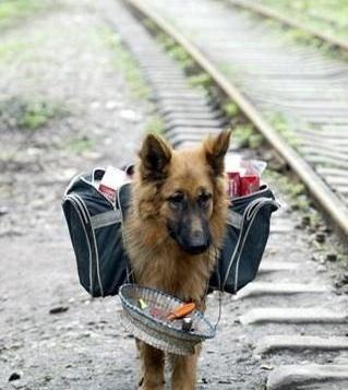 cute dog running away