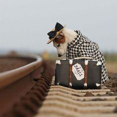 cute puppy running away