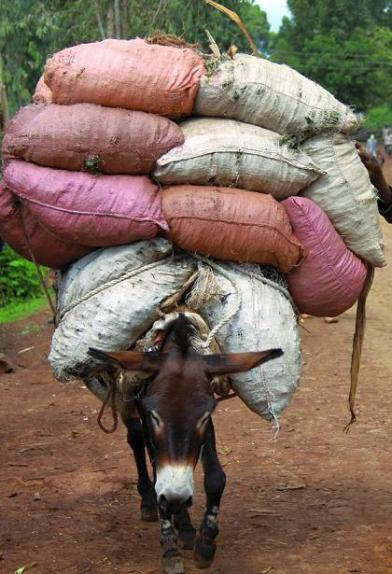 donkey carrying load