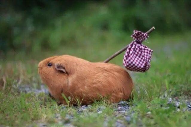 funny hamster running away