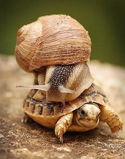 funny tortoise