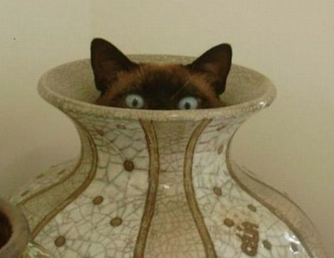 cat hiding in vase