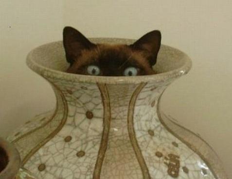cat hiding in vase
