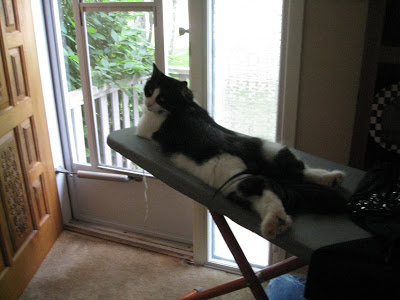 cat on ironing board-2