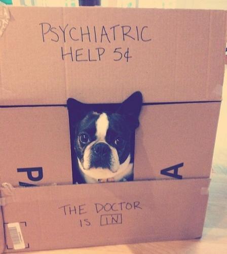 cute dog psychiatrist