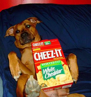 cute dog with cheez-it