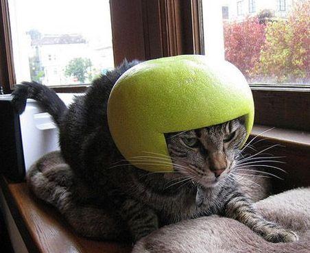 pomelo helmet