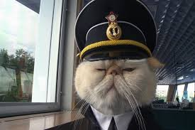 cat captain-1
