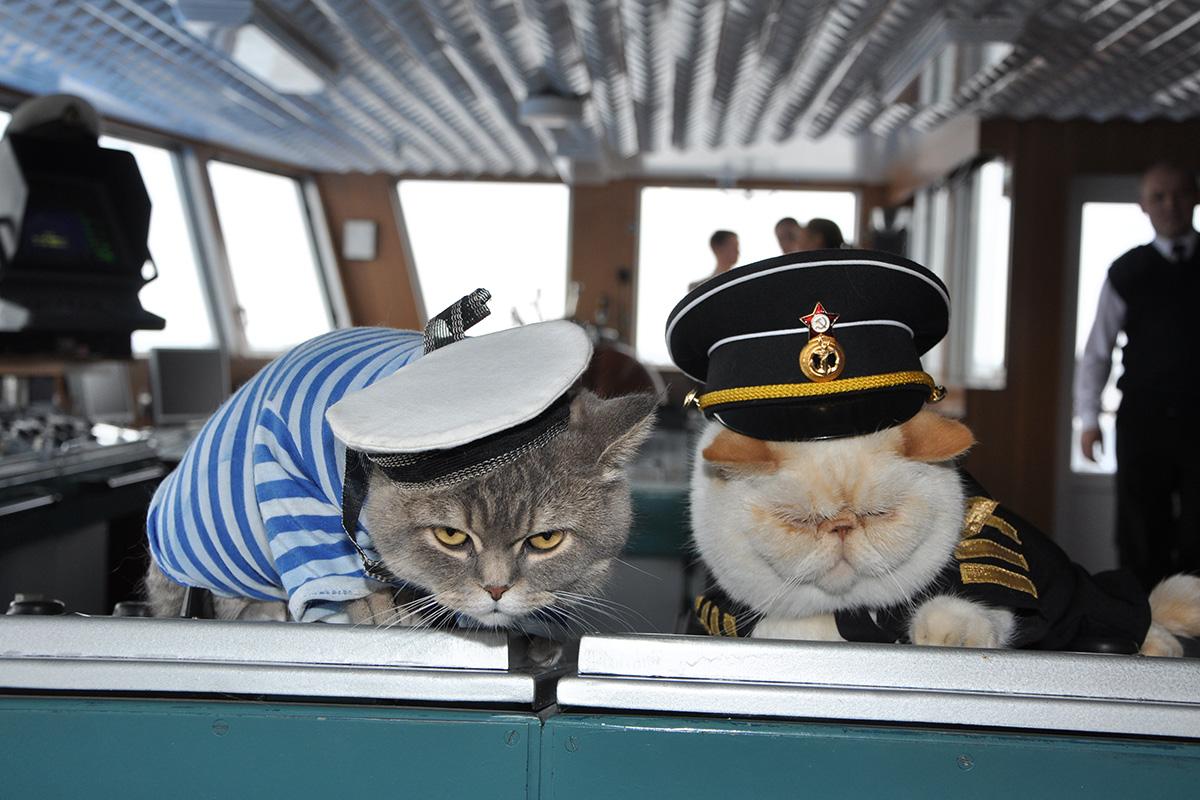 cat captain