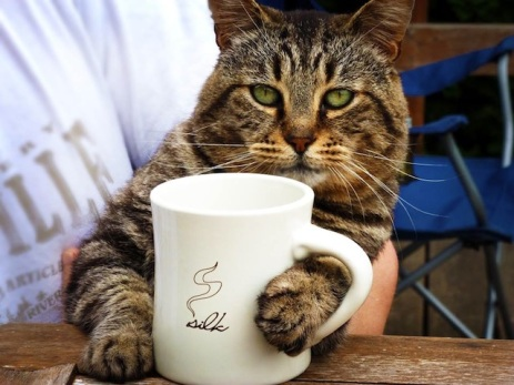 cat-coffee