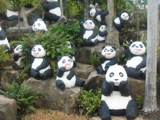 cute pandas at botanical garden