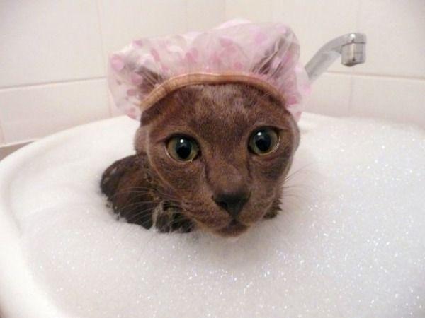 cat bubble bath